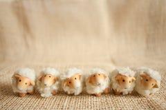六只逗人喜爱的绵羊在农场 库存图片