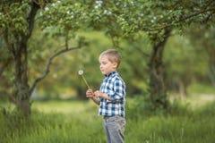 六岁的男孩在充分的成长的桦树森林里在春天 孩子舔一个大棒棒糖 免版税库存图片