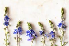 六朵蓝色野花 库存图片