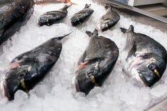 六条新鲜冻鱼 库存照片