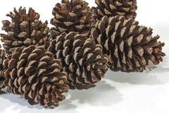 六自然棕色松树锥体样式和纹理 库存照片
