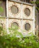 六镶板了被绘的老窗口垂悬在有绿色灌木围拢的木篱芭 库存照片