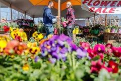 兰卡斯特,宾夕法尼亚- 2018年3月21日:开花销售 在户外的花店 免版税库存照片
