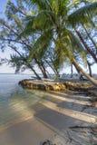 兰姆酒点棕榈树 图库摄影