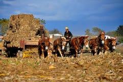 兰开斯特县, PA;打包玉米茎的门诺派中的严紧派的农夫 免版税库存图片