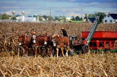 兰开斯特县, PA :有脱粒机的门诺派中的严紧派的农夫 免版税库存照片