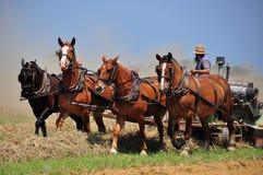 兰开斯特县, PA :犁领域的门诺派中的严紧派的农夫 免版税库存图片