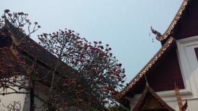 兰纳寺庙 库存照片