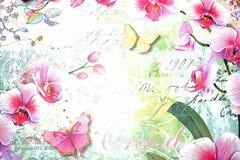 兰花。 库存图片