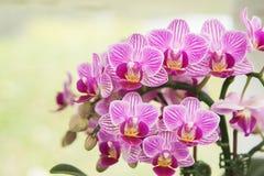 兰花兰花植物特写镜头  花束构成例证兰花夏天向量 库存照片