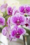 兰花兰花植物特写镜头  花束构成例证兰花夏天向量 免版税图库摄影