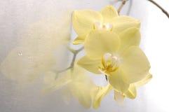 兰花兰花植物花 库存图片