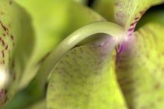 兰花兰花植物 免版税库存图片