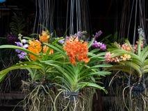 兰花农厂兰花花在植物市场上 免版税库存图片