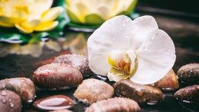兰花和小卵石在水背景中 图库摄影