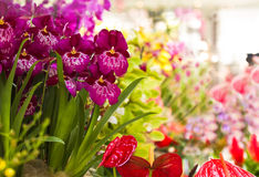 兰花和Anthuriumflowers 图库摄影