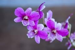 兰花在后院庭院是美好的颜色 免版税库存图片