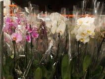 兰花在庭院部门超级市场 免版税库存照片
