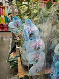 兰花在庭院部门超级市场 免版税图库摄影