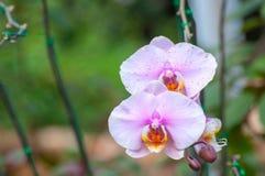 兰花在庭院里 免版税库存图片