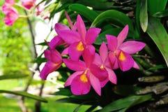 兰花在庭院里 免版税库存照片