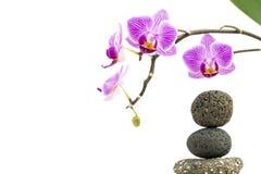 兰花在白色背景的花和小卵石金字塔 库存图片