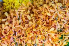 兰花在花市场上 免版税库存图片