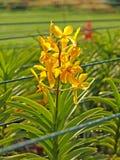 兰花在苗圃 免版税库存图片