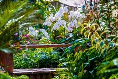 兰花庭院仿造物热带森林 库存图片