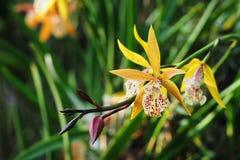 兰花庭院在热带 库存图片