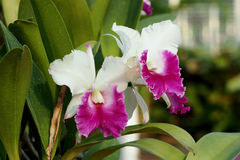 兰花庭院在热带 免版税库存照片