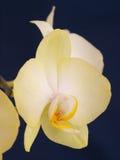 兰花植物兰花。花。 库存照片