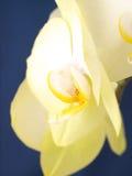 兰花植物兰花。花。 免版税库存图片