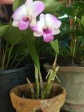 `兰花植物兰花`兰花植物 艺术和甜菜 库存照片