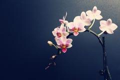 兰花植物兰花 免版税图库摄影