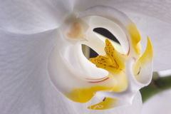 兰花植物兰花 库存图片