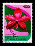 兰花植物卡宴,兰花serie,大约1997年 免版税图库摄影
