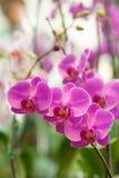 兰花植物在庭院里 库存图片