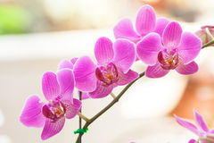 兰花植物在庭院里 免版税库存照片