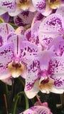 兰花植物盆的植物 免版税图库摄影