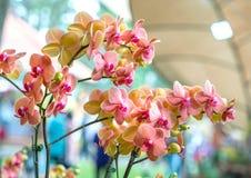 兰花植物花在春天开花装饰自然秀丽  库存照片