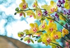 兰花植物花在春天开花装饰自然秀丽  免版税图库摄影