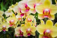 兰花植物,兰花 免版税库存图片
