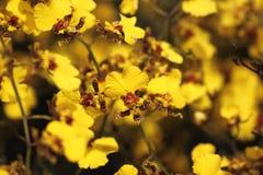 兰花植物, 免版税库存照片