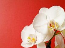 兰花植物 免版税库存图片