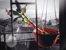 兰花植物 库存照片