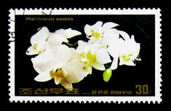 兰花植物amabilis,花serie,大约1984年 免版税图库摄影