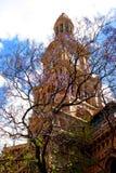兰花楹属植物树& clocktower 库存照片