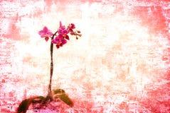 兰花粉红色 免版税库存图片