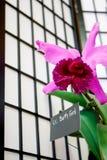 兰花节日充满活力的贝蒂・福特品种垂距 免版税图库摄影